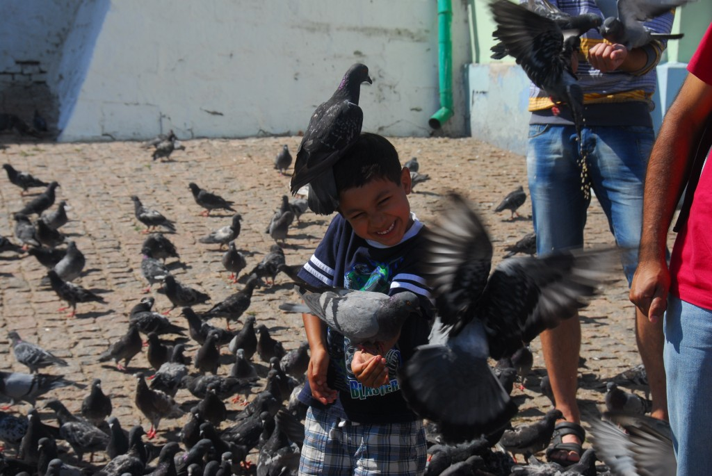 Attack of the ticklish pigeons outside the Trinity Lavra (Monastery) of St. Sergius