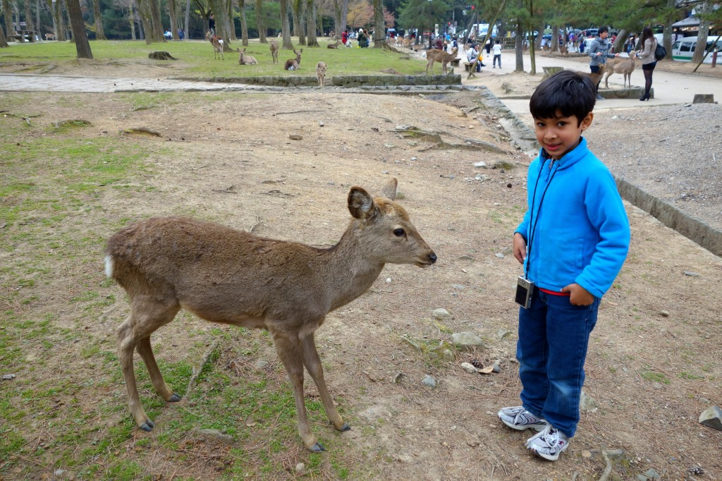This sika deer seemed intrigued by the paparazzi