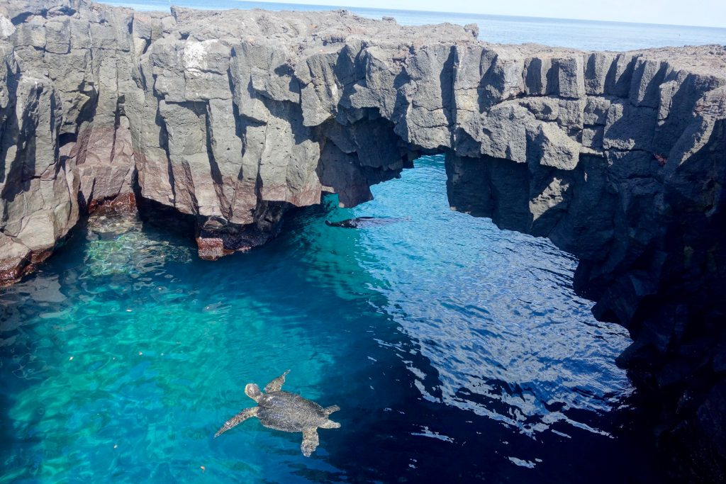 A Galápagos green turtle comes up for a gasp of air... ...in turquoise waters under a natural bridge