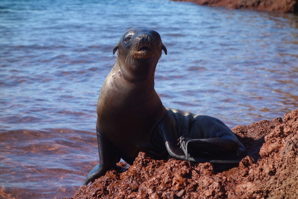 This sea lion pup was just adorable and captured our hearts